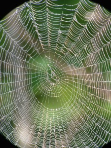 Spider web glowing with dew outside our Long Lake home.  Photograph taken on August 30, 2013.