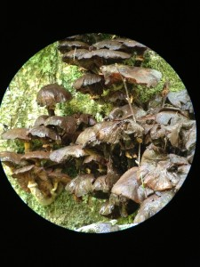Mushrooms photographed on August 30, 2013.
